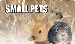 Small Pets Accessories